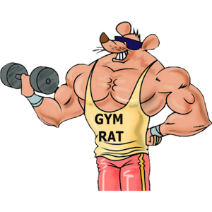 what is a gym rat